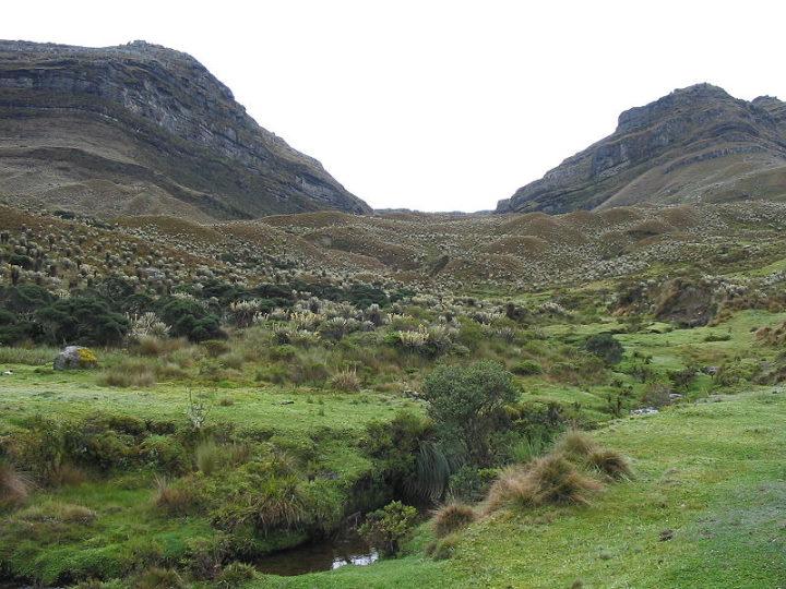 Paramo grasslands where guinea pigs eat