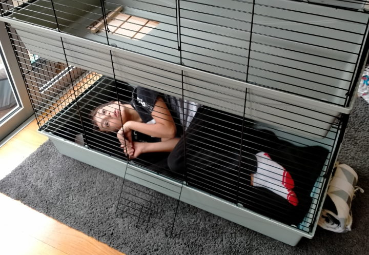 guinea pig cage with child inside