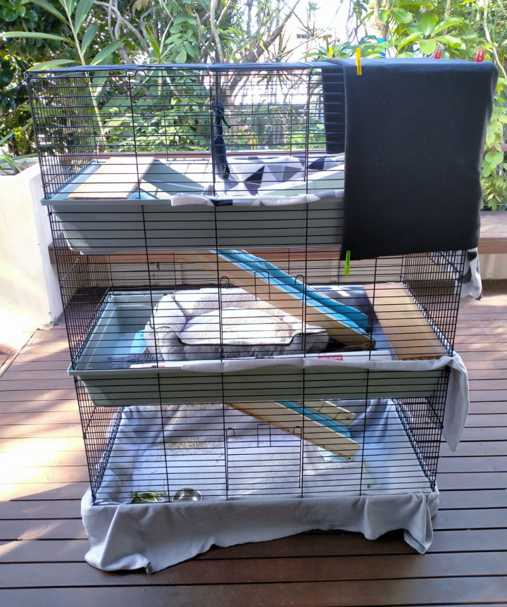 cage ramps as an aspect of guinea pig care