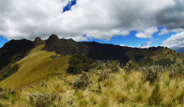 Ecuadorian grasslands