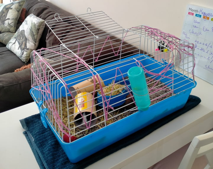 guinea pig cage that's too small