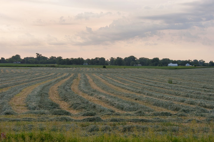 field of fresh hay