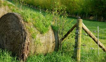bale of hay with grass growing on it