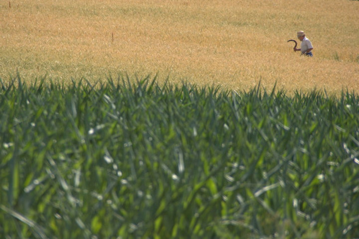 man with sickle in hay field