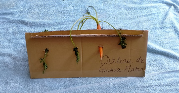 cardboard house for guinea pigs with carrot stuffed in it